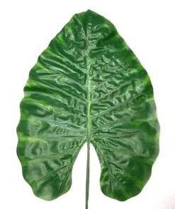 Kæmpe stort grønt blad