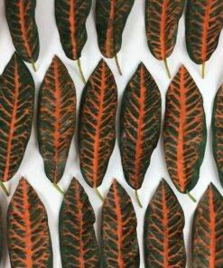 Blade orange grønne farver