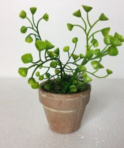 Grøn mini plante