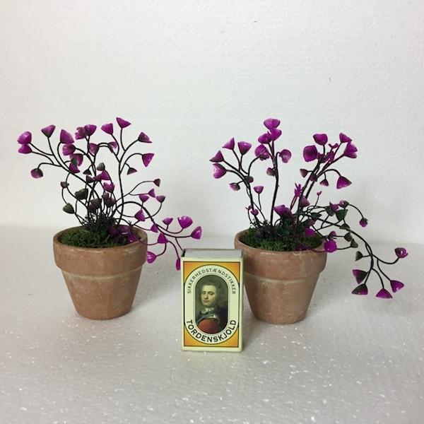 Pink mini plante