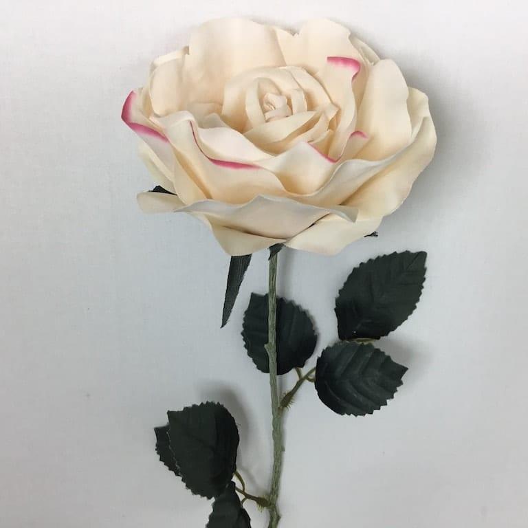 Rose i cremefarvet