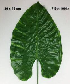 Kæmpe store grønne blade