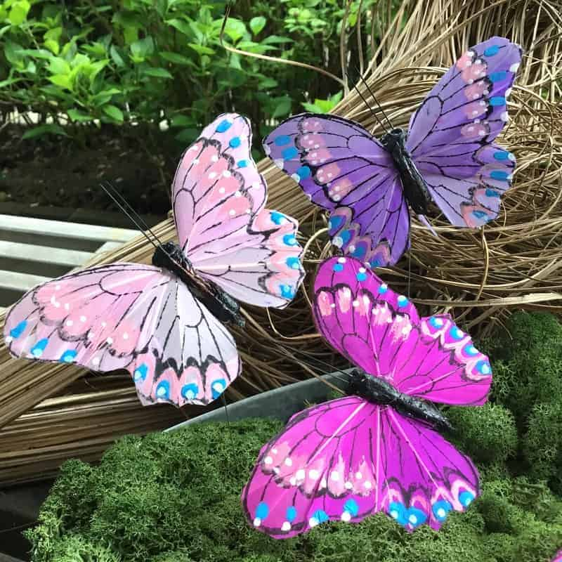 Pink sommerfugl med kontrastfarver