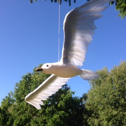 Fugl med smuk hale