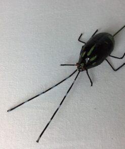 Kunstig sort bille insekt