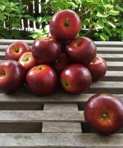 Rødt naturtro æble