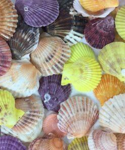 Muslinger farvet