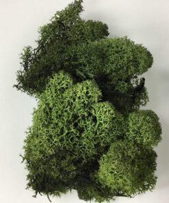 Islandsk mos grøn farve