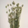 Olivengrøn tørrede buket