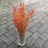 Orange tørrede blomster