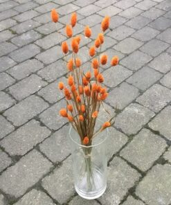 Orange dekorativ tørrede buket
