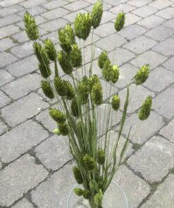 Grøn dekorativ tørrede buket