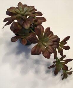 Kunstig meleret Succulent