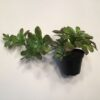 Kunstig Succulent