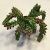 Kunstig dekorativ kaktus