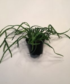 Kunstig grøn kaktus