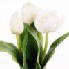 Naturtro hvide tulipaner