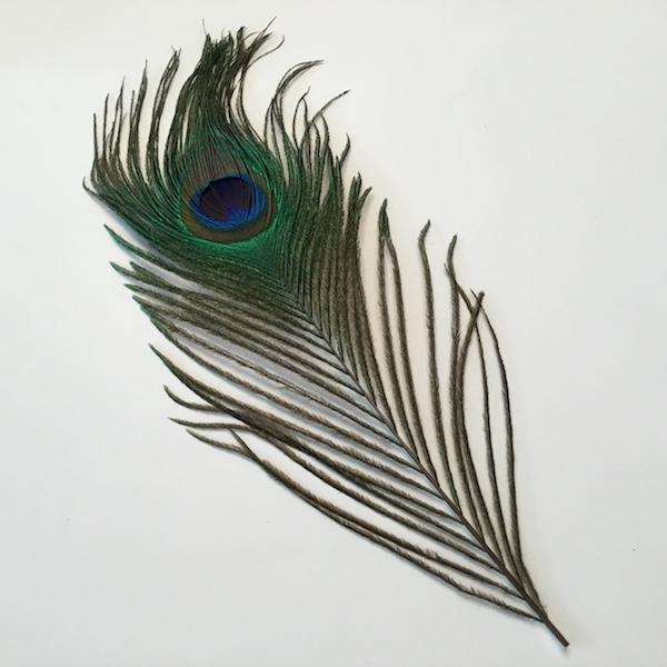 Dekorativ påfuglefjer