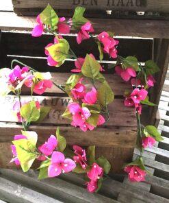 Bougainvilla ranke i pink