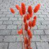 Orangetørrede blomster
