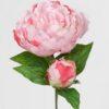 Rosa Pæon stilk