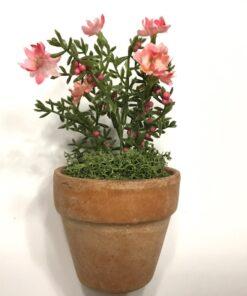 Rosadekorativ mini blomst