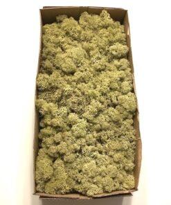 Olivenfarvet kasse Islandsk mos