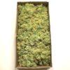 Lysegrøn kasse Islandsk mos