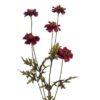 Blomstergren i bordeaux farve