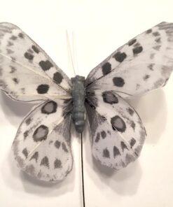 Grå plettet sommerfugl