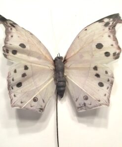 Lys grå sommerfugl