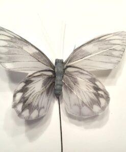 Gråmeleret sommerfugl