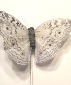 Lys grå mønstret sommerfugl