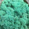 Søgrøn Islandsk mos