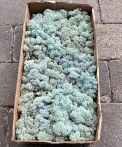 Lysblå kasse mos