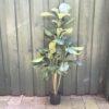 Kunstigt ficus robusta plante
