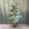 Kunstigt figentræ