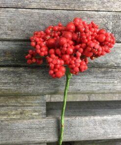 Naturtro rødt bundt bær
