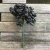 Naturtro sort bundt bær