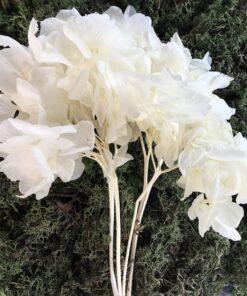 Præserveret lys Hortensia stilk
