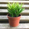 Grøn plante i potte
